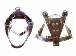 vand accesorii zgarzi lese caine bucuresti 18 sep 2012 2