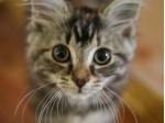 Cat de multe lucruri stii despre pisica ta?