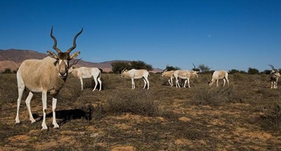 antilope-mendes-iarba