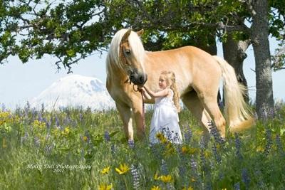 cal-haflinger-in-iarba-culoare