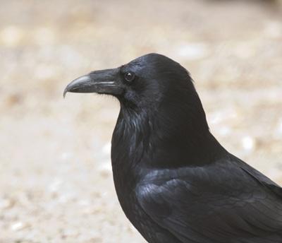 corb-profil