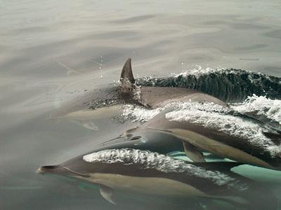 delfini-apa-reproducere