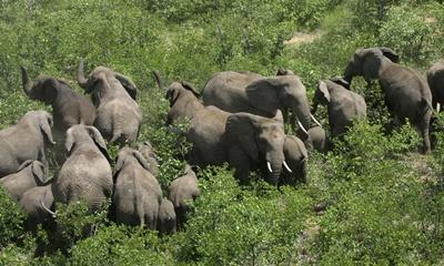 familie-elefanti-hranindu-se-mirosul
