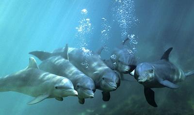 grup-de-delfini-animale-sociabile