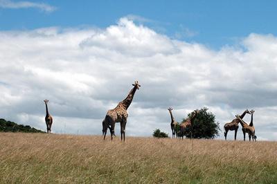 grup-girafe-apa