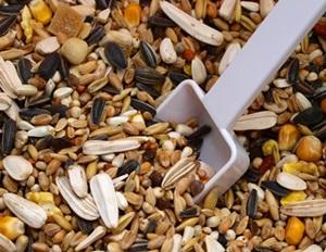 hrana-papagal-ara-stacojiu-seminte