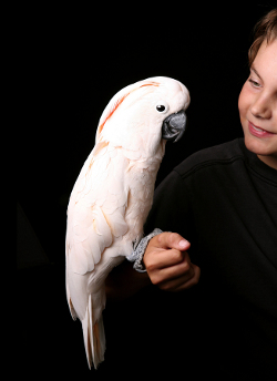 papagal-cacadu-si-copil-peletele