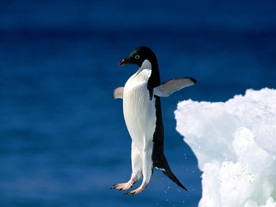 pinguin-incercand-sa-zboare-pradatori