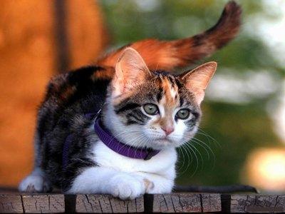 pisica-domestica-hrana-uscata