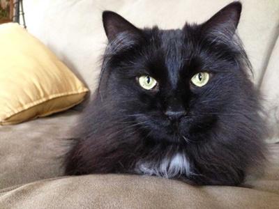 pisica-tiffany-locuinta