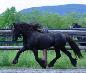 ponei-Fell-descriere-fizica