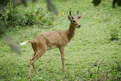 tapul-de-mlastina-bohor-animal-nocturn